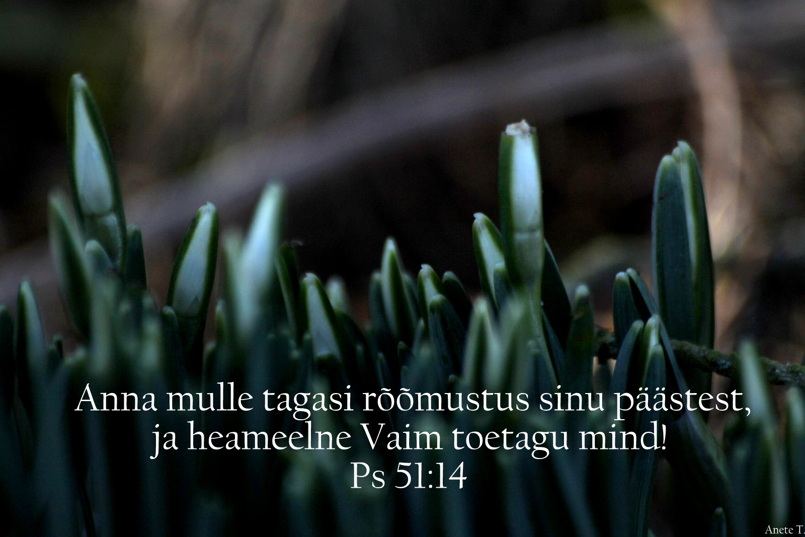 Piibel: Psalm 51:14